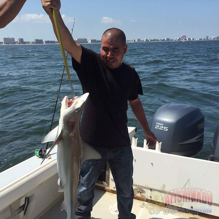 Charter Fishing Virginia Beach Fishing Report